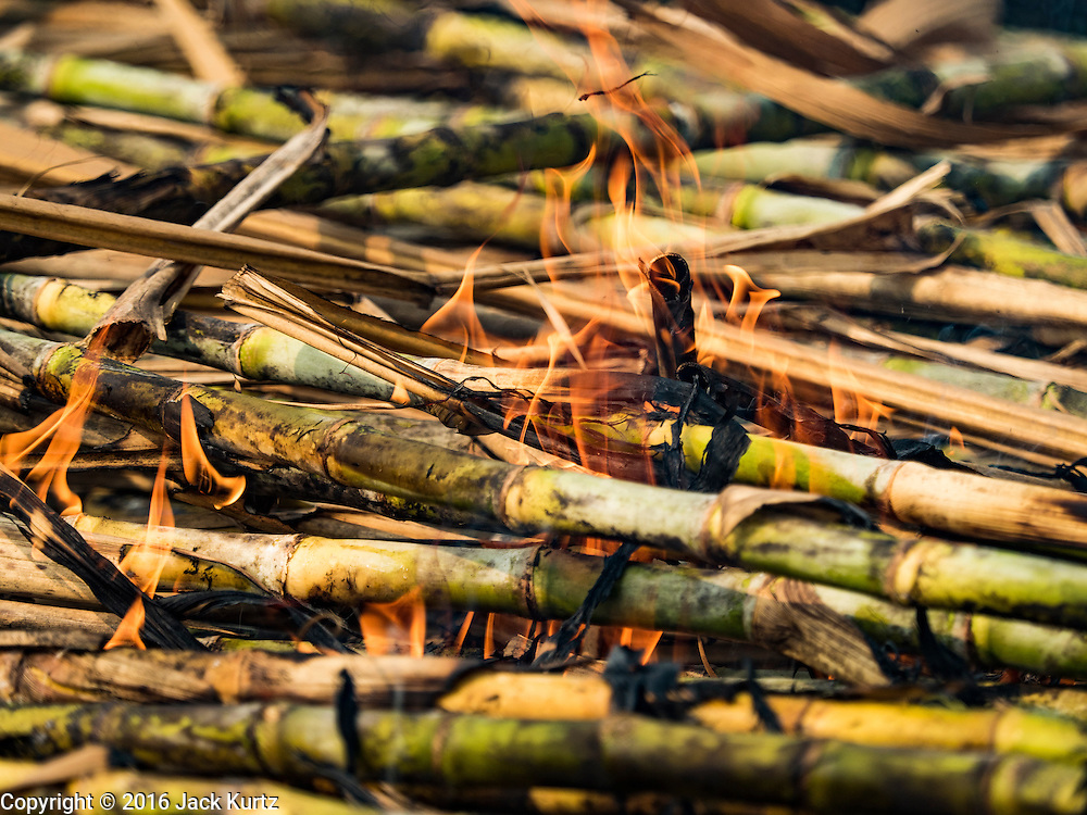 02 FEBRUARY 2016 - THUNG KHOK, SUBPAN BURI, THAILAND: Chaff from sugar plants burns in a sugar cane field during the harvest in Suphan Buri province, in western Thailand. Thai sugar cane yields are expected to drop by about two percent for the 2015/2016 harvest because of below normal rainfall. The size of the crop is expected to increase slightly though because farmers planted more sugar cane acreage this year. Thailand is the second leading exporter of sugar in the world. Thai sugar growers are hoping a good crop would make up for shortages in global markets caused by lower harvests in Brazil and Australia, where sugar yields have been stunted by drought. Because of the drought in Thailand, sugar exports are expected to drop by up to 20 percent, contributing to a global sugar shortage. The drought is is also hurting the quality of Thai sugar, because sugarcane grown in drought is less sweet than normal so mills need to process more cane to make the same amount of sugar. Thai sugar farmers have lost 20 percent to 30 percent of their output this year because of the drought.        PHOTO BY JACK KURTZ