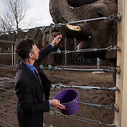 Dr. Joshua Schiffman, feeds and elephant after taking a blood sample from the ear of one of the elephants at Hogle Zoo. Dr. Schiffman is doing cancer research on why elephant rarely get cancer. Eric Peterson is the elephant manager at Hogle Zoo in Salt Lake City,  Utah Thursday March 31, 2016. (August Miller)