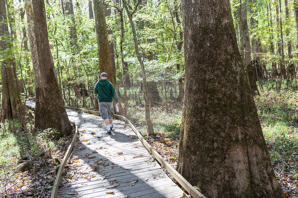 A man walks the boardwalk loop winds through bald cypress trees at Congaree National Park, the largest intact expanse of old growth bottomland hardwood forest remaining in the southeastern United States in Columbia, South Carolina.