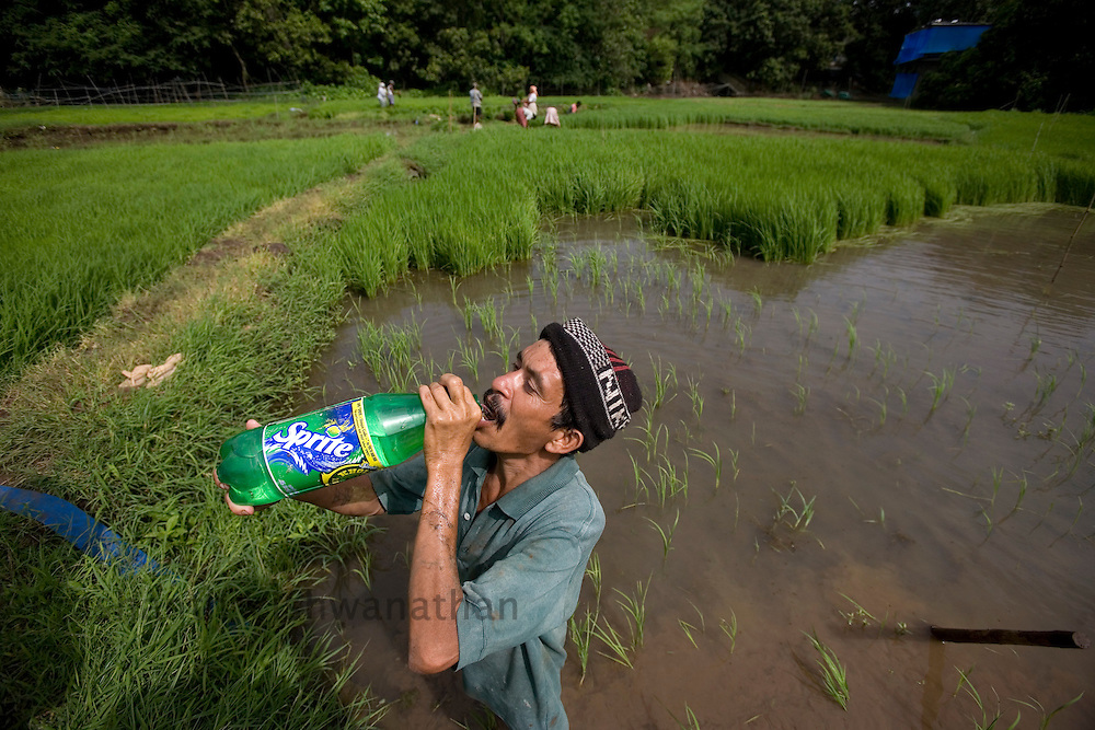 A farmer drinks water while working on a rice field in the outskirts of Mumbai, India, on Saturday, July. 12,2008. Photographer:  Prashanth Vishwanathan/Bloomberg News