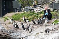 Pingviner i Atlanterhavsparken i Ålesund.<br /> Foto: Svein Ove Ekornesvåg