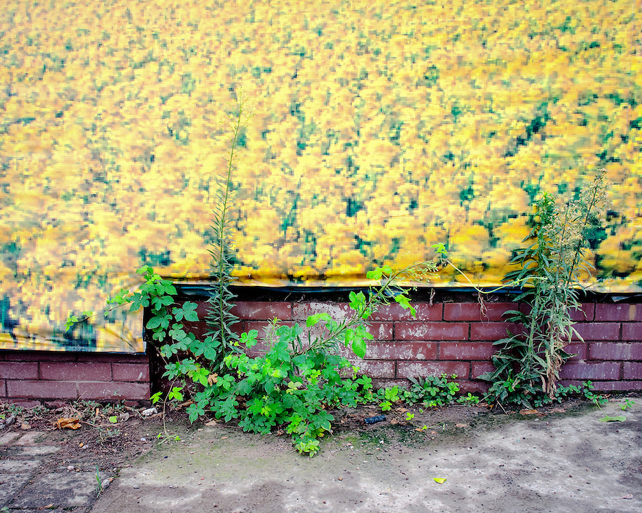 A wall size poster of a field of flowers.