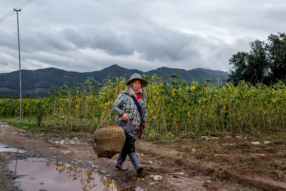A woman walks past the farmland of Manhenuan village, Xishuangbanna, China. With the financial success of the nearby Dai minority cultural village at Olive Dam, residents of Manhenuan are trying to open their village up to tourism as well.