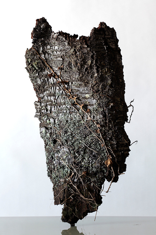 piece of a tree bark with lichen