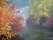 misty autumn creek in The Washington Cascades
