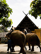 Guests riding elephants at the entrance of Anantara Golden Triangle resort.