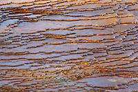 Algae-tinted hot spring travertine terrace pools; Mammoth Hot Springs Terraces, Yellowstone NP., Wyoming