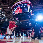 January 9, 2018, New York, NY : The St. John's mascot mugs for the cameras as the Red Storm prepare to take on the Hoyas at the Garden. In something of a rematch of their 1985 contest, Basketball greats Patrick Ewing and Chris Mullin returned to Madison Square Garden on Tuesday night to face off as coaches with their respective Georgetown and St. John's teams.  CREDIT: Karsten Moran for The New York Times