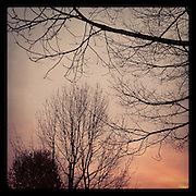 2011, Richard Walker, Seattle, WA, USA, Instagram, Apple, phone, iPhone, app, trees, winter, season, December, dark, sunset, twilight, evening, pink, weather, view,