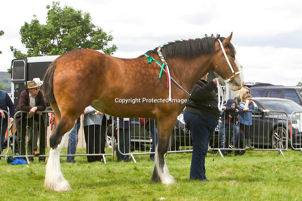 R &amp; S Cockfroft's Mare  SPRINGWELL HARTCLIFFE ADELE<br /> Sire  Boothay Richard
