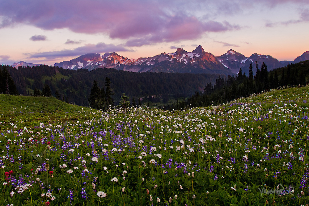 Man I love this place. I had to no idea the beauty of Mt. Rainier and the surrounding mountains. Every way you look is an amazing photograph. The last light of the day illuminated the clouds and lite up the mountain peaks of the Tatoosh Range seen through this lush field of wildflowers. I'll be back next year!