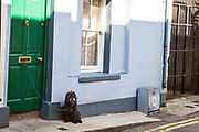 Dog on Street in Wexford, Ireland