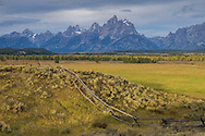 A buckfence in Grand Teton National Park lights up from a moment of sunlight on a cloudy morning. Most of the aspen trees near the Snake River were a golden yellow on this mid-September day.