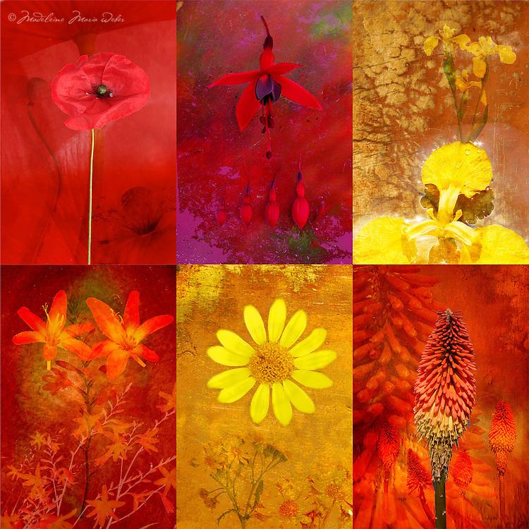 Irish Wildflowers / fa046