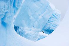 Antarctica #1 2006
