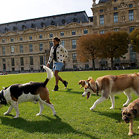 People with their dogs in the Tuileries Gardens.