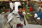 Like most food markets in India, Ujjain's central market is a maelstrom of shoppers elbowing their way around hundreds of vendors sitting on tarpaulins with piles of produce. Cows, revered by Hindus, wander with them, though salespeople and shoppers alike push them out of the way if they get too inquisitive. The Patkar family of Ujjain, India, habituated to the tumult, move with the crowd, calmly picking out what they need. Hungry Planet: What the World Eats (p. 171). The Patkar family of Ujjain, Madhya Pradesh, India, is one of the thirty families featured, with a weeks' worth of food, in the book Hungry Planet: What the World Eats.