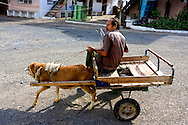 Man riding a goat cart in Minas de Matahambre, Pinar del Rio, Cuba.