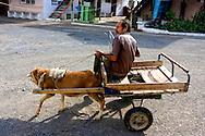 Man riding a goat cart in Minas de Matahambre, Pinar del Rio, Cuba.