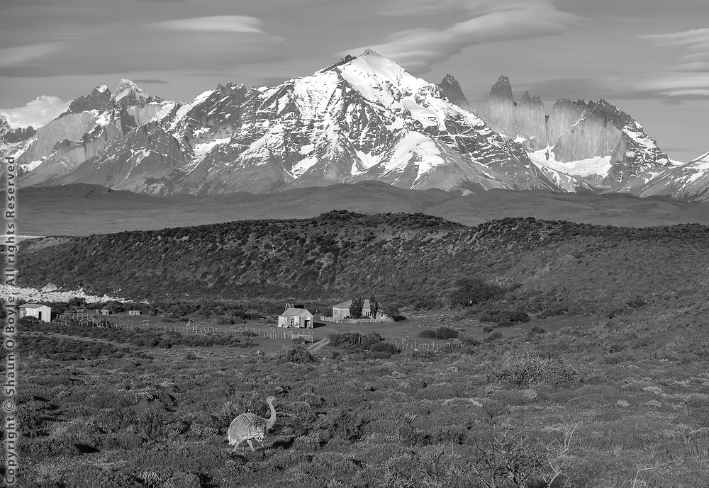Rhea, farm and Torres Del Paine