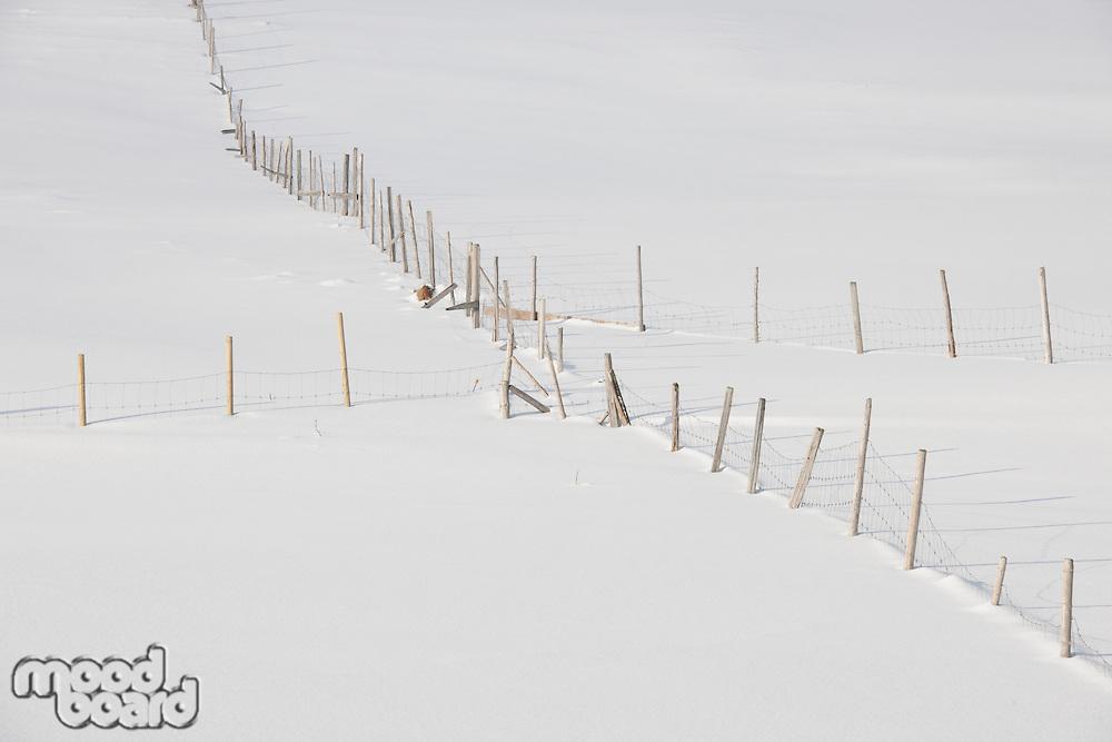 Fenced fields in Ytresand Moskensoy Loftofen Norway