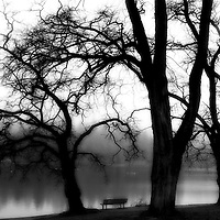 Silhouetted trees by a bench and a lake
