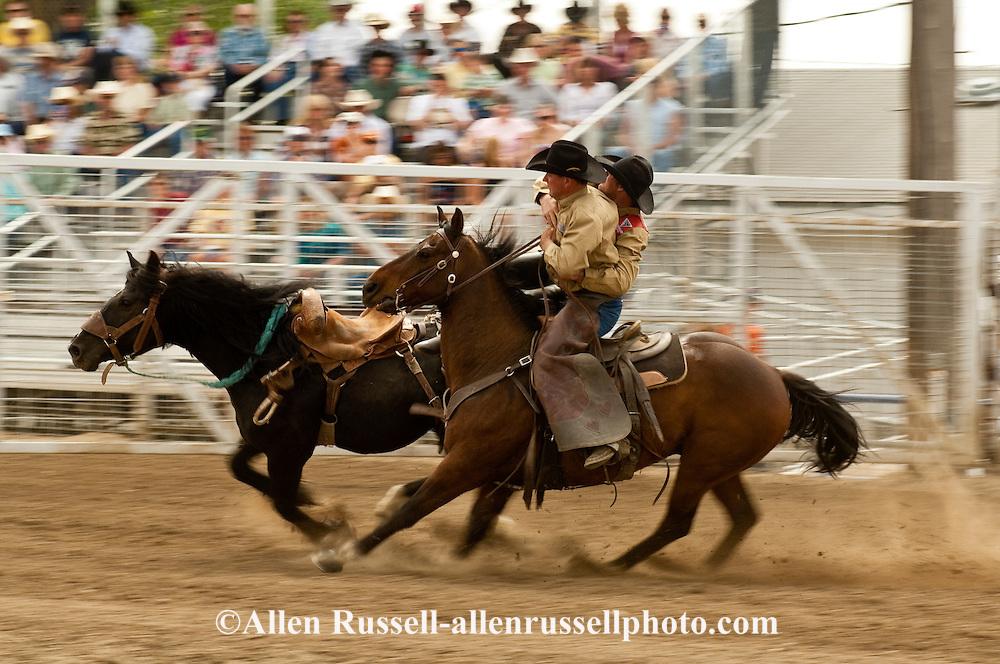 Pickup man Lynn Ashley picks up saddle bronc rider, Miles City Bucking Horse Sale, Montana