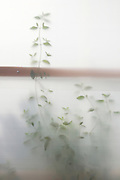 green plant seen through frosted plastic