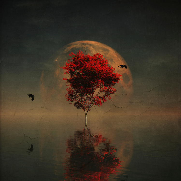 This is a scene that feels as though it is speaking to us from our dreams. This is certainly not the kind of scene you would run across on a normal day. This is certainly not the kind of scene you would run across on this planet! A red maple tree stands surrounded by water. A moon that can be only be described as deep and simply massive hangs overhead. Two birds are flying around the tree, but it seems unlikely that they are going to be much help. Are you on your own? Available as t-shirts, wall art, or interior home décor products.