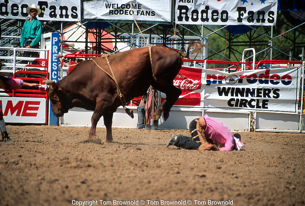 Rodeo event; Bull riding