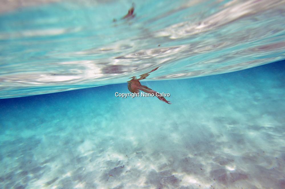 Underwater shot of jellyfish in Cala Macarella, Menorca