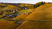 Saffron Fields Vineyard 2020 for projects