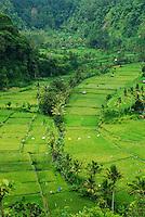 Beautiful, lush farm valley in east Bali, Indonesia.