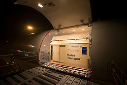 Flying stalls being in the airplane<br /> Departure of the horses to the World Cup Finals in Las Vegas from Schiphol - Amsterdam 2015.<br />  © Hippo Foto - Dirk Caremans