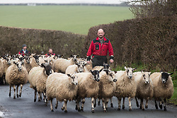 © Licensed to London News Pictures . 10/03/2017 . Preston , UK . Farmer Allan Wensley driving sheep at Plumpton Hall Farm . Allan faces protests from neighbours and environmental campaigners after renting fields around his farm to fracking firm Cuadrilla . Photo credit : Joel Goodman/LNP