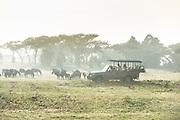 Luxury safari photography in Africa