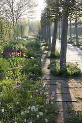 Morning light in the Lime Walk at Sissinghurst Castle Garden in spring