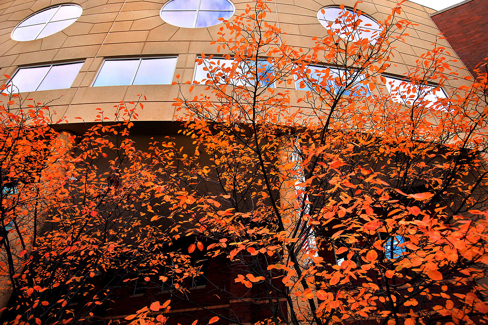 University Center shrouded in fall color. Fall Scenics 2013 on Central Michigan University campus. Central Michigan University photo by Steve Jessmore
