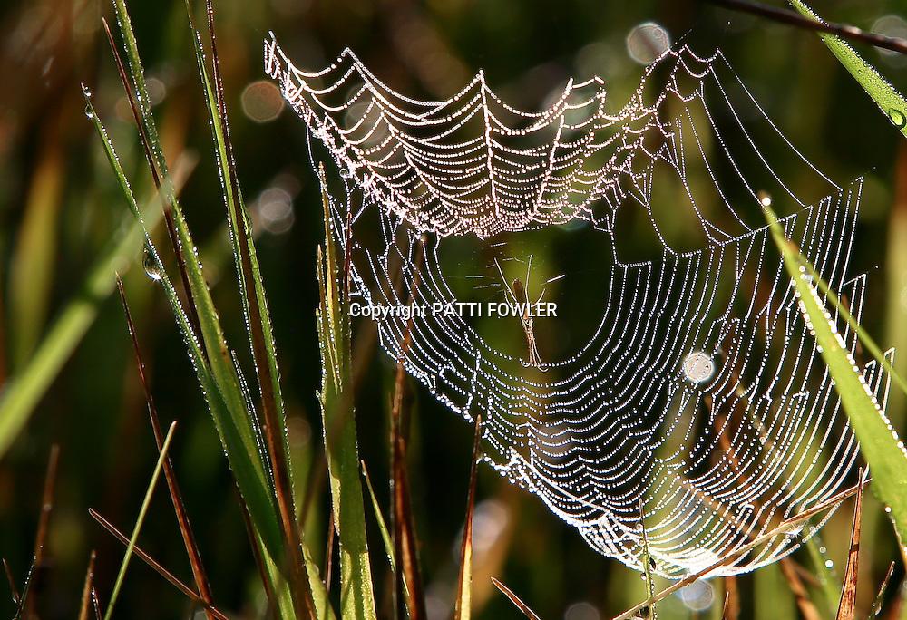spider web silhouette