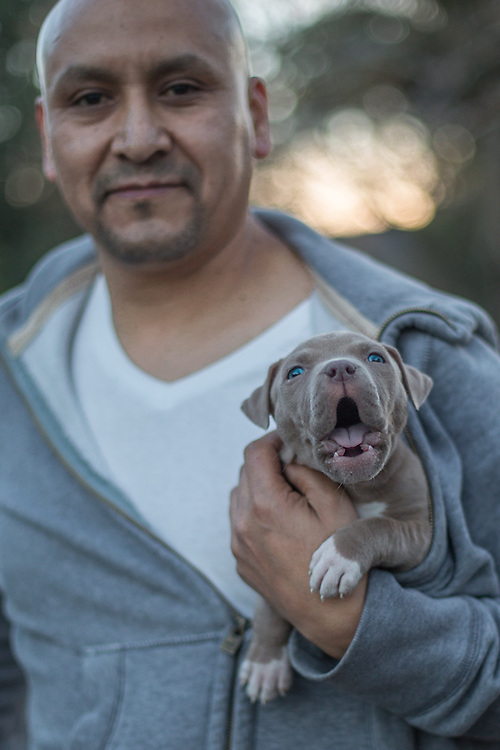 Bartender Alfredo Rayon with his 7 week old puppy, Cato, on South Oak Street in Calistoga.