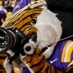 November 10, 2012; Baton Rouge, LA, USA; LSU Tigers mascot Mike the Tiger holds a camera on the sideline during the second half of a game against the Mississippi State Bulldogs at Tiger Stadium.  LSU defeated Mississippi State 37-17. Mandatory Credit: Derick E. Hingle-US PRESSWIRE