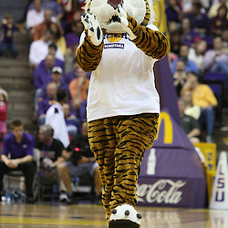 14 February 2009: LSU mascot Mike the Tiger during a 73-66 win by the LSU Tigers against SEC rival the Ole Miss Rebels at the Pete Maravich Assembly Center in Baton Rouge, LA.