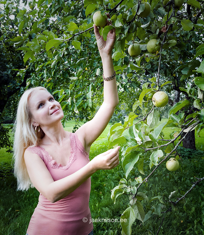 Woman picking apples. Blond hair.