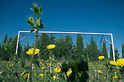 goal post with many yellow daisy flowers