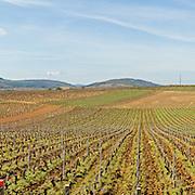 Vineyards near Beaune, Bourgogne (Burgundy), France.