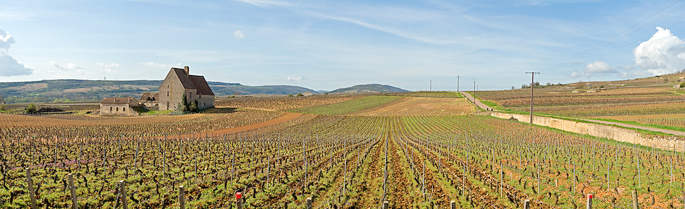 Vineyards near Beaune, Bourgogne (Burgundy), France.