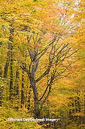 64776-01320 Trees in fall color Schoolcraft County Upper Peninsula Michigan