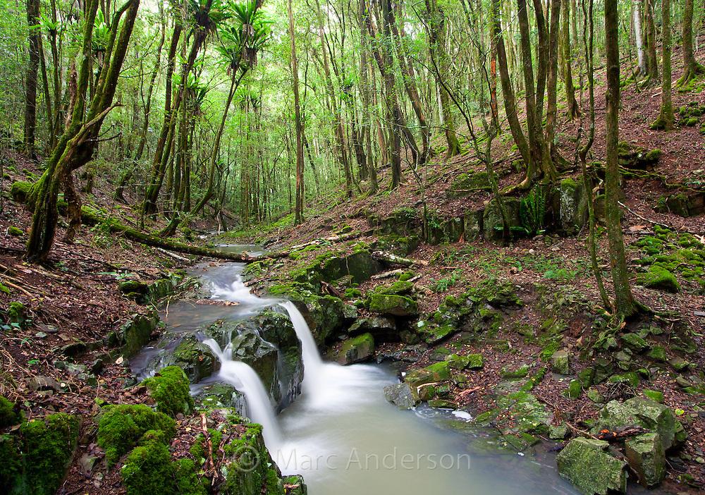 A beautiful rainforest stream in Barrington Tops National Park, Australia