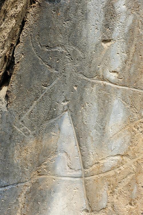 Rock carvings, Aurochs, Bos primigenius, C&ocirc;a valley Archaeological park,<br /> Portugal