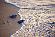 A pair of turtles on the beach in Cyprus